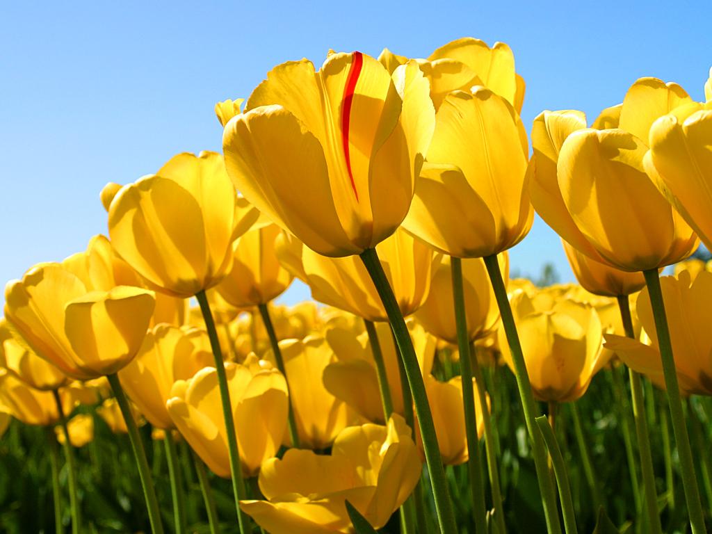 Primavera! Creala dentro di Te